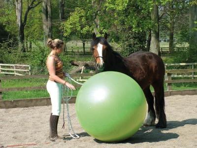 Paardenvoetbal 85, 95 en 120 cm
